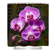 Magenta Orchids Shower Curtain
