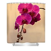 Magenta Phalaenopsis Orchid Shower Curtain