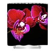 Magenta Phaleonopsis Orchid Shower Curtain
