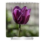 Magenta Tulip Squared Shower Curtain
