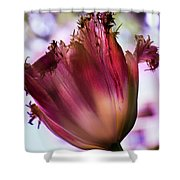 Magenta Tulip Shower Curtain