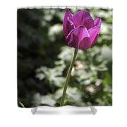 Magenta Tulip Shower Curtain