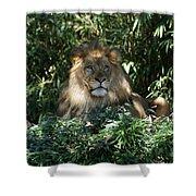 Magestic Lion Shower Curtain