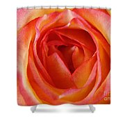 Magestic Pink Rose Shower Curtain
