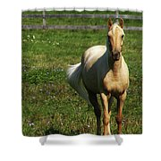 Maggie - Michigans Morning Breeze Shower Curtain
