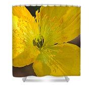 Magic Of The Golden Poppy Shower Curtain