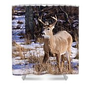 Magic Reindeer Shower Curtain