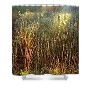 Magical Light On The Marsh Shower Curtain