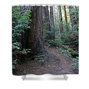 Magical Path Through The Redwoods On Mount Tamalpais Shower Curtain