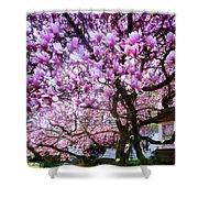 Magnificant Magnolias Shower Curtain