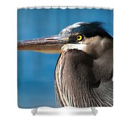 Magnificent Blue Heron Shower Curtain
