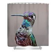 Magnificent Hummingbird Male Shower Curtain