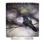 Magnificent Hummingbird Shower Curtain