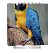 Magnificent Macaw Shower Curtain