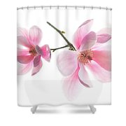 Magnolia Is The Harbinger Of Spring. Shower Curtain
