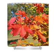 Magnificent Maple Leaves Shower Curtain