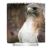 Magnificent Red-tailed Hawk  Shower Curtain