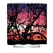 Magnificent Sunset And Trees Shower Curtain