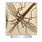 Magnified Mosquito Shower Curtain