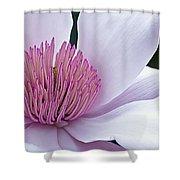 Magnolia 06 Shower Curtain