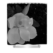 Magnolia And Blossom Shower Curtain