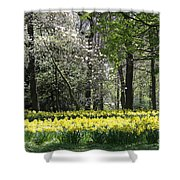 Magnolia And Daffodils Shower Curtain
