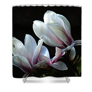 Magnolia And House Guest Shower Curtain