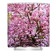 Magnolia Beauty #14 Shower Curtain
