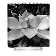 Magnolia Bloom B/w Shower Curtain