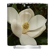 Southern Magnolia Bloom Shower Curtain
