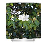 Magnolia Blooming 3 Shower Curtain