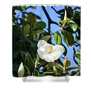 Magnolia Blooming 4 Shower Curtain