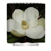 Magnolia Blossom 5 Shower Curtain
