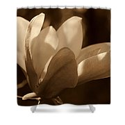 Magnolia Blossom Bw Shower Curtain