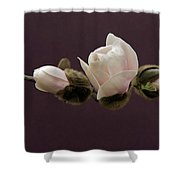 Magnolia Blossoms Shower Curtain