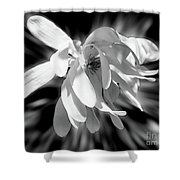 Magnolia Flower In Black And White Shower Curtain