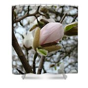 Magnolia Flower Pink White 19 Magnolia Tree Spring Art Shower Curtain