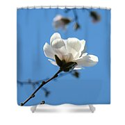 Magnolia Flower Tree Art Prints Blue Sky Floral Baslee Troutman Shower Curtain