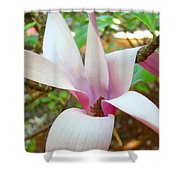 Magnolia Flowering Tree Art Prints White Pink Magnolia Flower Baslee Troutman Shower Curtain