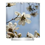 Magnolia Flowers White Magnolia Tree Art 2 Blue Sky Giclee Prints Baslee Troutman Shower Curtain