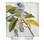 Magnolia Glauca Shower Curtain
