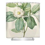Magnolia Glauca Shower Curtain