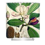 Magnolia Hodgsonii Shower Curtain