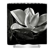 Magnolia In Black And White Shower Curtain