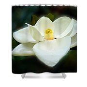 Magnolia In Color Shower Curtain