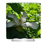 Magnolia Macrophylla  Shower Curtain