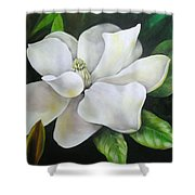 Magnolia Oil Painting Shower Curtain