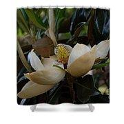 Magnolia Seeds Shower Curtain