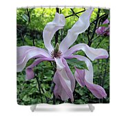 Magnolia Soulangeana Shower Curtain