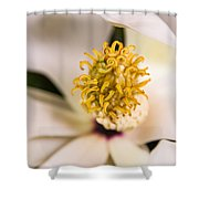 Magnolia Study Shower Curtain